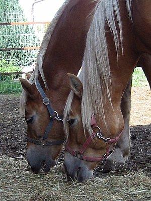Bella und Birka